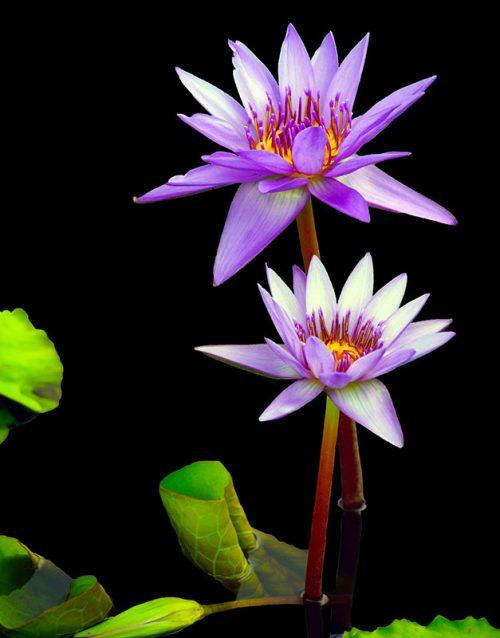 Flower-leaf-2-Daniel Heller