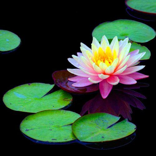 Flower leaf 3-Daniel Heller